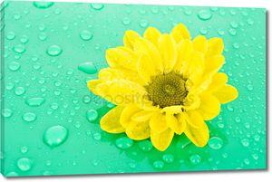 Желтый цветок на зеленом фоне