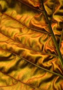 Желтый мятый лист дерева