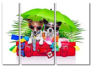 праздник собаки