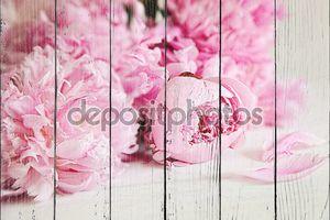 Розовый пион цветы на поверхности древесины