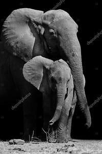 Слон мать и ребенок