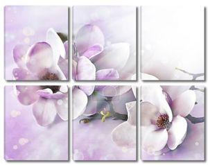 романтический фон с цветами магнолии