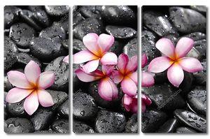 Франжипани с камнями