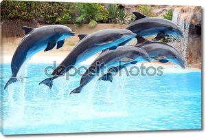 Пяти дельфинов прыгать