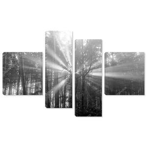 Лучи солнца тщательного деревьев и зелени