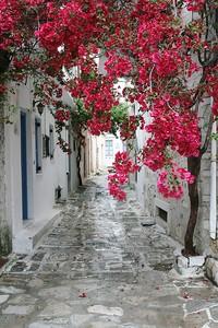 Улица с ярким цветочным деревом