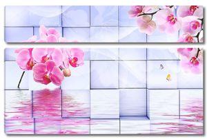 Розовые орхидеи, отражение в воде