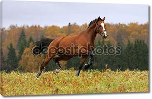 Лошадь в поле осенью