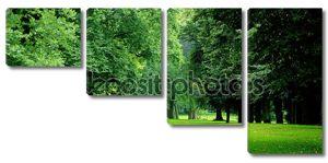 Зеленые деревья в парке Варошлигет