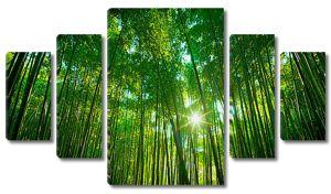Солнце через густой бамбук
