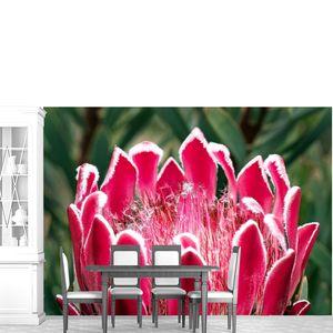 Цветок кактуса крупно