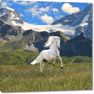 Белая лошадь, запустить Галоп в долине