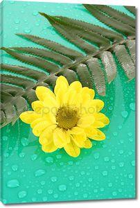 Желтые ромашки на зеленом фоне