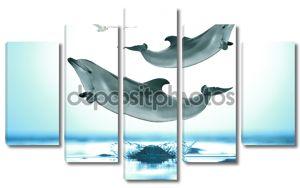 дельфины, выскочив на море