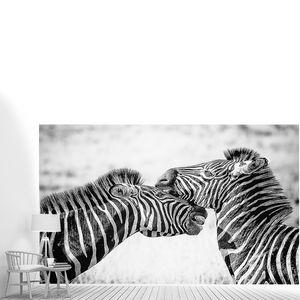 Пара зебр