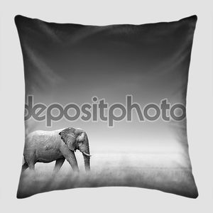 слон с зеброй (артистическая обработка)