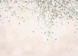 Магнолия цветущая весной