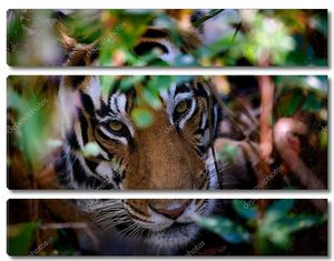 Портрет тигра в кустах