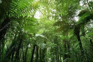 Папоротники в джунглях