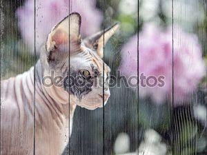 милый кот Сфинкс
