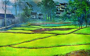 Сельские поля в Китае