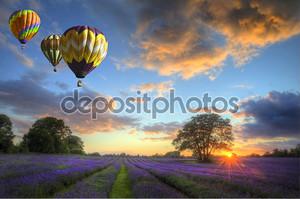 Воздушные шары, пролетел над лаванды пейзаж закат