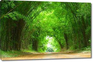 Высокая бамбука Обложка дороги глины