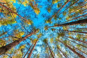 полог дерева