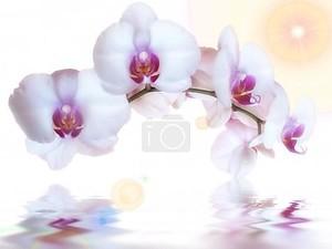 Орхидеи и отражение в воде