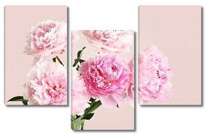 Букет розовых пионов на светло розовый фон