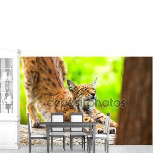 рысь в зоопарк, поцарапать его ногти на стволе.