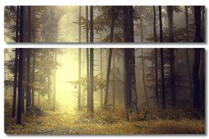 Бор в тумане