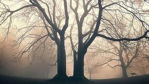 Два дерева в тумане