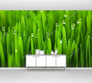 Свежая зеленая трава с каплями росы