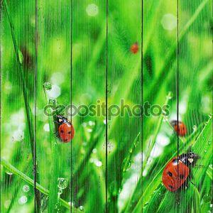 свежая зеленая трава с водными снижениями