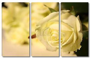 Яркие желтые розы