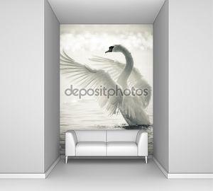 Изящные лебеди на озере в черный и белый