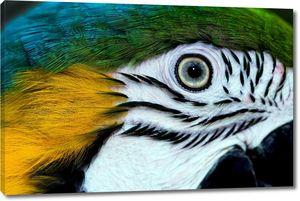 Глаз попугая