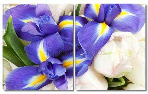 Фон из ирисов и белых тюльпанов