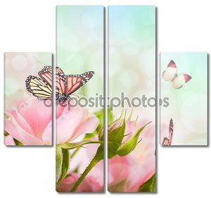 Красивые розы и бабочка, цветок, цветочный фон