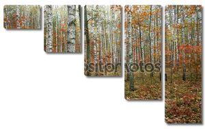 Падение в лесу