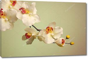 Красивая веточка орхидей