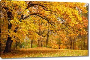 Желтый лес