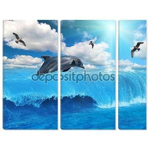 серый дельфин и чайки