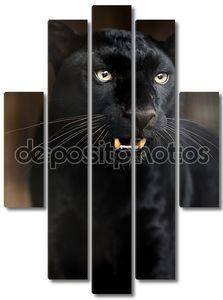 Молодая черная пантера