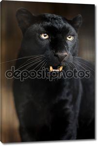 портрет леопарда