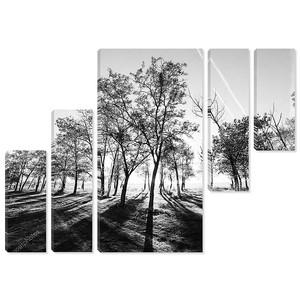 огни утреннего леса, черно-белой фотографии