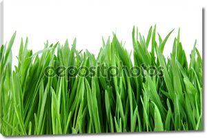 Макро зеленая трава, изолированные на белом фоне