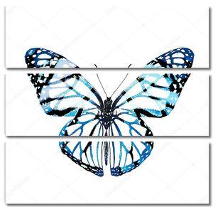 Голубая бабочка на белом фоне