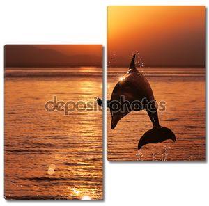 Дельфин на фоне красивого заката